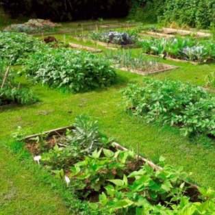Initiation à la permaculture et jardinage permaculturel