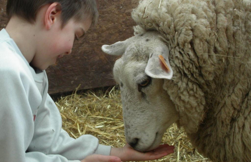 La vie à la ferme: découverte en famille