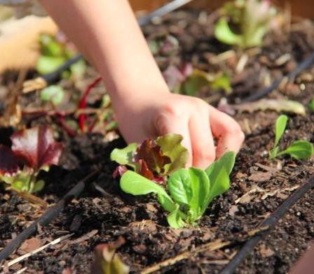 Mini jardiniers
