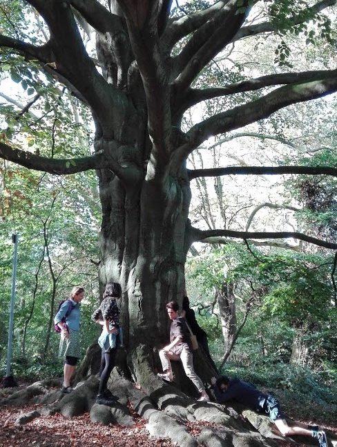 arbre, équipe, promenade, teambuilding