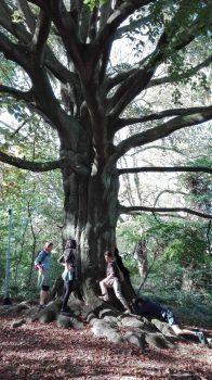 Teambuilding, activité groupe d'adultes, arbre, forest